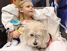 A Dog Helps Doctors With Surgery  ... from PetsLady.com ... The FUN site for Animal Lovers