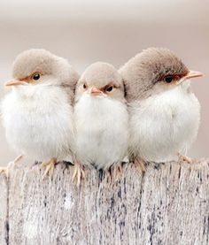 birds of a feather ::::: ❥.
