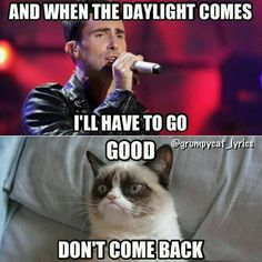 Grumpy cat quotes, funny grumpy cat, grumpy cat jokes …For more funnies and hilarious jokes visit www. Grumpy Cat Quotes, Funny Grumpy Cat Memes, Funny Animal Jokes, Funny Cats, Animal Humor, Funny Minion, Cats Humor, Really Funny Memes, Stupid Funny Memes