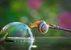 Image: A snail stretches toward its reflection in a bubble in Berdichev, Ukraine (© Vyacheslav Mischenko/Caters News)