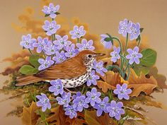 Wood Thrush by John Sloane