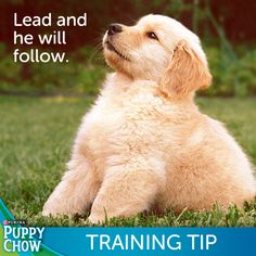 Be strong and confident in your training. A puppy's instinct is to follow the leader!