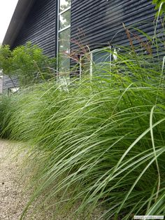 20 voorbeelden van een tuin met siergrassen   Huisentuinmagazine.nl