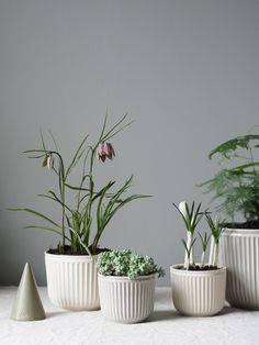 A simple Spring refresh – bringing the outside in with Kähler Design