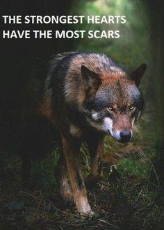 Is Wolf Your Spirit Animal? Wolf Love, Wolf Spirit, My Spirit Animal, Wolf Pictures, Animal Pictures, Animals Photos, Beautiful Creatures, Animals Beautiful, Tier Wolf