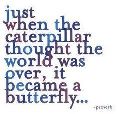 Ah, butterflies....