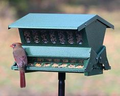 Double Sided Absolute II Bird Feeder with Pole & Hanger Stop tenacious squirrels from dining on the bird seed in your backyard with the Heritage Farms Double Sided Absolute II Bird Feeder with Pole and Hanger. The all metal body and weight sensitive. Bird Feeder Hangers, Bird Feeder Poles, Squirrel Resistant Bird Feeders, Sunflower Kernels, Black Oil Sunflower Seeds, Metal Pole, Plastic Windows, Metal Spring, No Waste