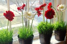 Gerbera Daisies and Wheat Grass would make great centerpieces for a gnome party! Grass Centerpiece, Daisy Centerpieces, Centerpiece Ideas, Lady Bug, Ladybug Party, Ladybug Picnic, Bouquet, Love Bugs, Spring Green