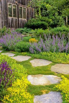 Country Garden Details: Green Country Garden Keywords: Veronica, Garden, Nepeta X Faassenii Six Hills Giant, Purple, Flowerbed, Yellow, Landscaping, Nepeta, Path Sedum, Coreopsis, Paving