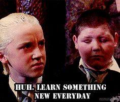 Tom Felton Draco Malfoy GIF