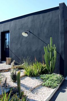 Piedras y cactus para el jardín