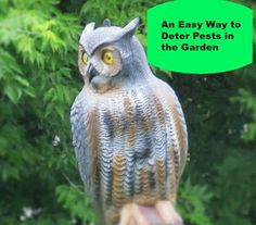 Vickie's Kitchen and Garden: An Easy Way to Deter Pests in the Garden