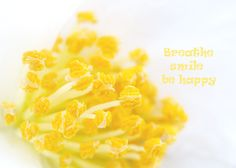Artistic white flower macro photography yellow by PhotographySpa, $14.00