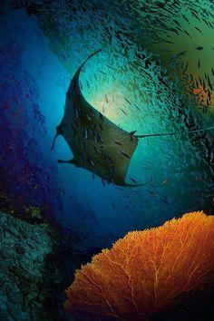 Manta Dreams, Krabi, Thailand   Via: Andrey Narchuk