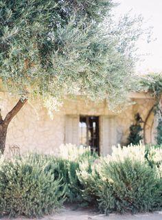 summer garden lavender, rosemary, olive trees