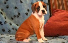 Special – Boxer Puppies for Sale in PA | Keystone Puppies