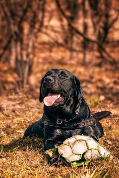 Guffi the dog by Takadk