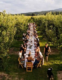 """Agritourism in the Pacific Northwest """"Harvest Swoon"""" (March Photo by Peter Frank Edwards Eine wunderbare Idee für eine Weinveranstaltung. The Effective Pictures We Offer You About Agritourism i Dream Wedding, Wedding Day, Party Wedding, Wedding Dinner, Wedding Summer, Trendy Wedding, Party Summer, Long Table Wedding, Wedding Photos"""