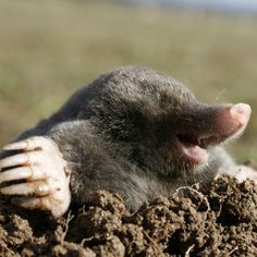 mole, I have lots of these