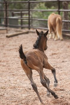 © Daily Dog Tag | young foal running in ring Horse Haven @bfas #SaveThemAll #BestFriendsAnimalSanctuary