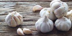 Knoblauch bringt Magen und Darm in Schwung. Ganz besonders die Bakterien vom Typ Heliobacter pylori, die sich im Magen vermehren und Entzündungen verursachen, werden von Knoblauch schachmatt gesetzt. Knoblauch wirkt zusätzlich wie Treibstoff: Er regt die Drüsen im Körper zu vermehrter Tätigkeit an, zum Beispiel die Verdauungsdrüsen in Magen und Darm. Dadurch kann Knoblauch Blähungen, Darmkrämpfe und Verstopfungen lindern.