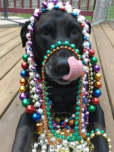 """""""Jack-di Gras"""" Known world-wide also as """"Carnival"""" & """"Fat Tuesday""""....a celebration believed to be originally a recreation of the time at a party when Jack first put on some beads (insert beady eyes joke here...) , but now is a festival of his defeat of the M.O.N.T."""
