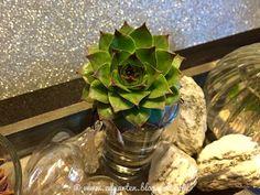 Reise durch den Advent - Deko Cabbage, Vegetables, Food, Hammer And Chisel, Small Glass Vases, Bon Voyage, Soap Bubbles, Potted Plants, Celebration