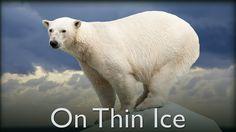 On Thin Ice - The Secrets of Nature On Thin Ice, Save Wildlife, Our Planet, Polar Bear, Habitats, The Secret, Bears, Survival