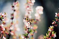"""Beautiful butterfly"" by AJ Batac, via Flickr"