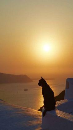 Sunset in Santorini I Love Cats, Crazy Cats, Cute Cats, Funny Cats, Pretty Cats, Beautiful Cats, Animals Beautiful, Beautiful Pictures, Animals And Pets