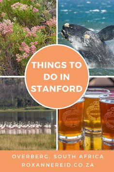 17 things to do in Stanford in the Overberg - Roxanne Reid Beer Tasting, Cheese Tasting, All About Africa, Stuff To Do, Things To Do, Africa Destinations, Slow Travel, Go Hiking, Whale Watching