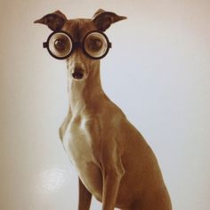 The Intellectual Dog