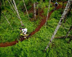 Copper Harbor bike trail, Northern Michigan