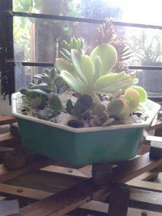 Pequeño jardín con #suculentas