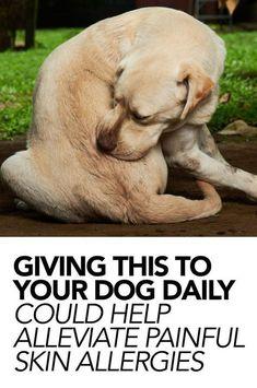 Dog Health Tips, Pet Health, Itchy Dog Remedies, Natural Remedies, Allergy Remedies, Dog Skin Allergies, Dogs With Allergies, Seasonal Allergies, Dog Allergy Symptoms