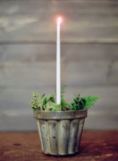 taper candle + evergreen