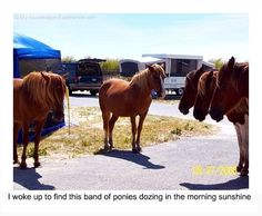 (Assateague Island Wild Ponies in Campsite!) Visit Fort Bragg Leisure Travel Services for information. http://www.fortbraggmwr.com/recreation/leisure-travel-services/