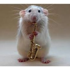Yay!! My last day of saxophone today!