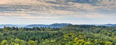 Naturpark Pfälzer Wald