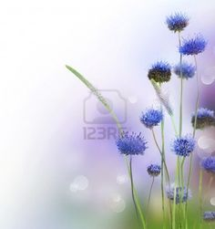 Picture of Abstract Flowers Border Design stock photo, images and stock photography. Latest Wallpapers, Wallpaper App, Do You Like It, Border Design, Abstract Flowers, Pretty Cool, Planting Flowers, Watercolor Paintings, Stock Photos