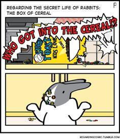 #bunny #bunnies #rabbit