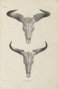 Skull Finger Tattoos, Bull Skull Tattoos, Cool Arm Tattoos, Bull Skulls, Unique Tattoos, Black Tattoos, Animal Skeletons, Animal Skulls, Molon Labe Tattoo