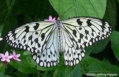 Exotic Butterfly Photos