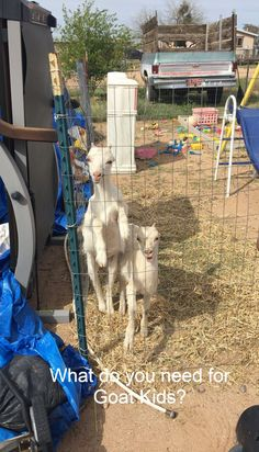 What do you Need for Goat Kids? Raising Farm Animals, Raising Chickens, Goat Care, Do You Need, Kids Reading, Baby Feeding, Goats, Cool Pictures, How To Find Out
