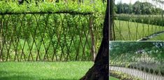 20+Beautiful+Examples+Of+Living+Willow+Fences