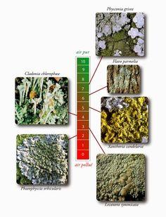 Permaforêt: Le biotope du Noyer - 1ère partie. Le noyer est-il si toxique?