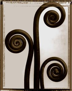 Fiddleheads by Tom Baril