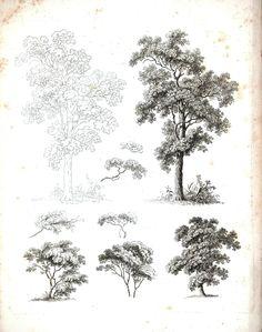 Botanical - Black and White - Tree sketches 5