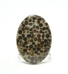 Oolite Egg Stone Unset Jewelry Stone Cabochon 21 by FenderMinerals,