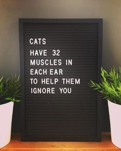 cats have 32 muscles in each ear to help them ignore you Funny Cat Quotes - Funny Cat Quotes Witty Quotes, Funny Mom Quotes, Cat Quotes, Inspirational Quotes, Quotes About Cats, Animal Quotes, You Funny, Funny Cats, Hilarious